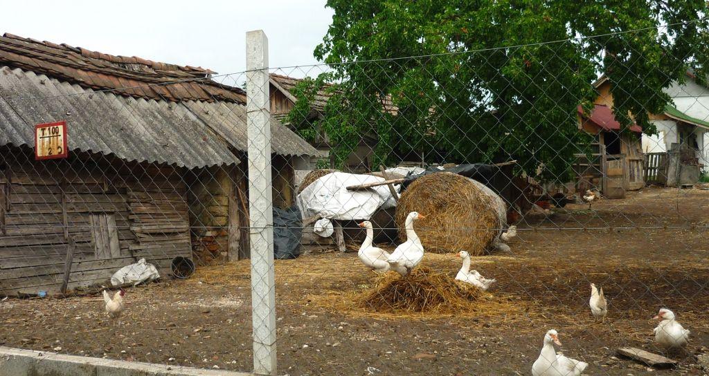 boerenerfje midden in een gewone straat